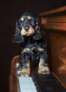 Puppy-on-Piano-731×1024